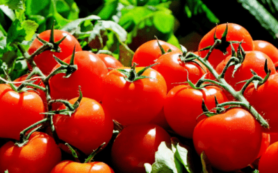 Tomato Nutrition: Health Benefits of Tomatoes