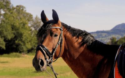 Tomato Fertilizer: Does Horse Manure Grow Healthy Tomato Plants?