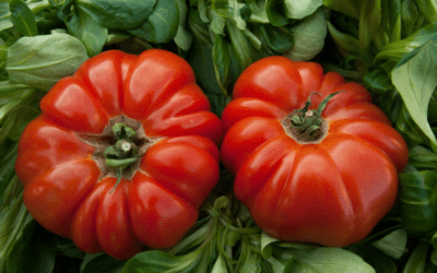 Growing Tomatoes: How to Prune Tomato Plants