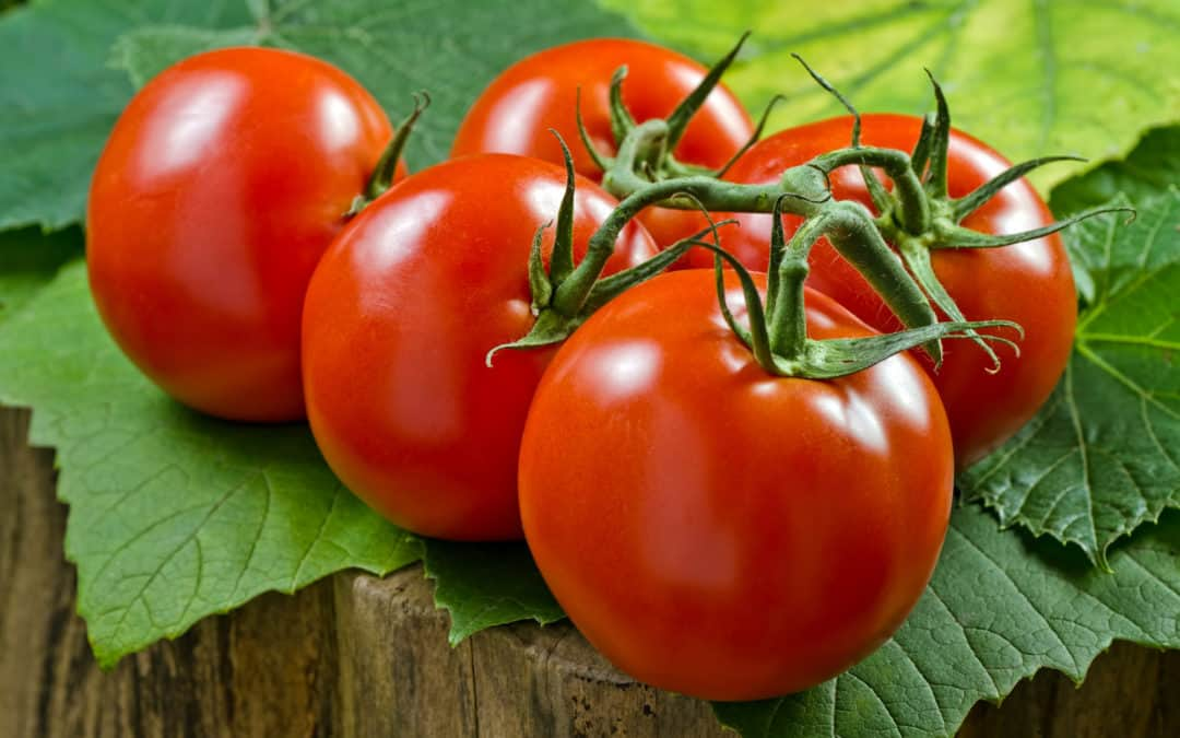 Tomato Fertilizer: Types of Tomato Blights and How to Deal With Them