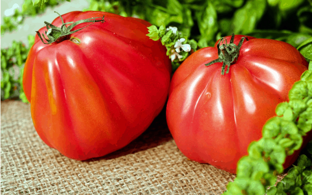 Tomato Fertilizer: What Nutrients Will Grow Bigger Tomatoes?
