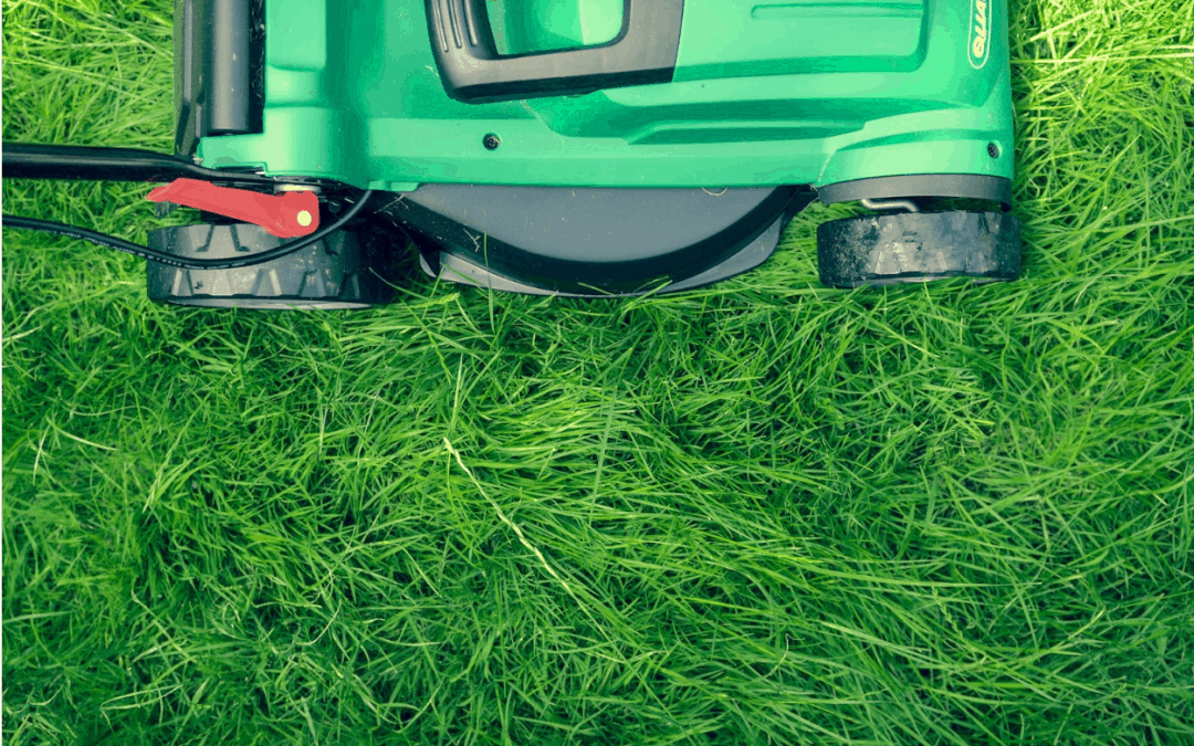 Should Grass Clippings Be Left on the Lawn?