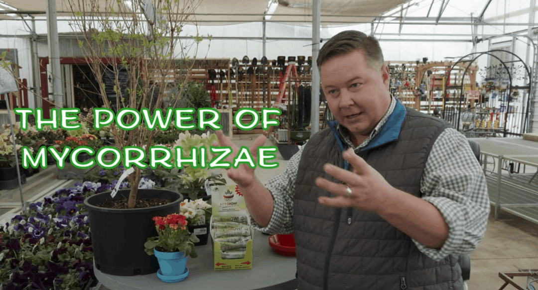 What Is Mycorrhizae And How Is It Used?